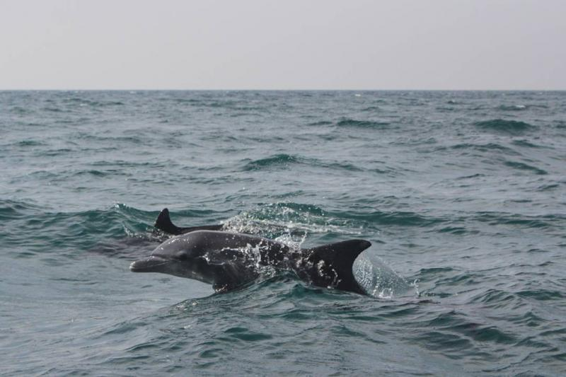 Beautiful dolphins in hengam island