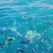 Hengam islands colorful fishes